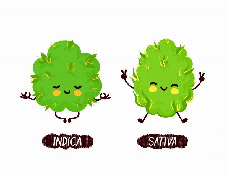אינדיקה וסאטיבה